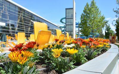 Ezer virágpalántát ültettek el a Kecskeméti Fürdőben
